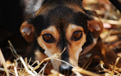 Fear and Loathing at the Vets – Puppy socialisation so important