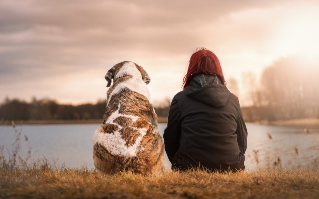 A simple task to help your pets during the COVID-19 Pandemic
